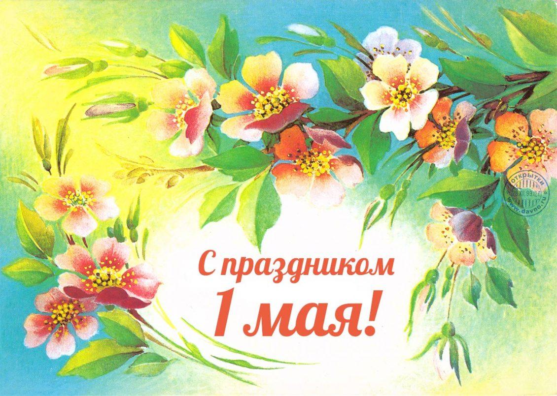 Поздравления на картинках с 1 мая, сделать